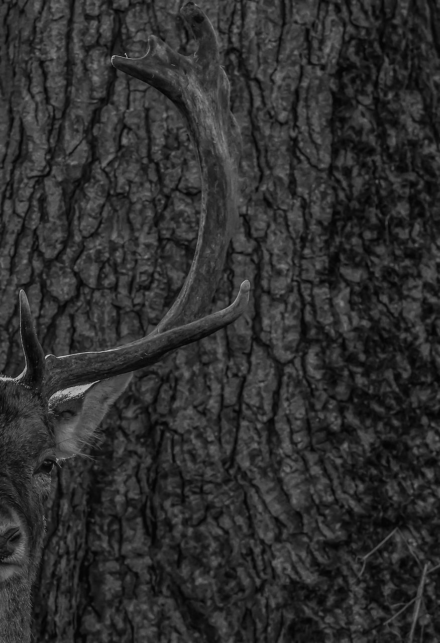 tree trunk, tree, bare tree, branch, nature, no people, textured, day, outdoors, beauty in nature, close-up, dead tree, animal themes