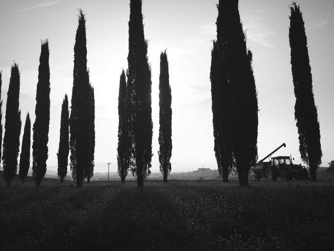 Bw_collection EyeEm Best Shots - Black + White Monochrome Blackandwhite EyeEm Best Shots Tuscany