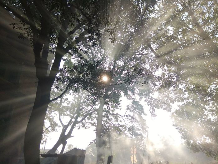 Low Angle View Tree Silhouette Sky Day Illuminated Nature Mobile Photography Beauty In Nature Outdoors Mobilephotography Morning Sun Smokey Light Rays Sun And Trees