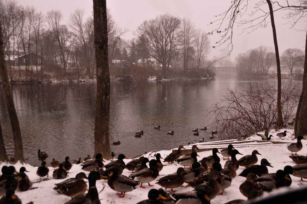 View Of Ducks By Lake During Winter