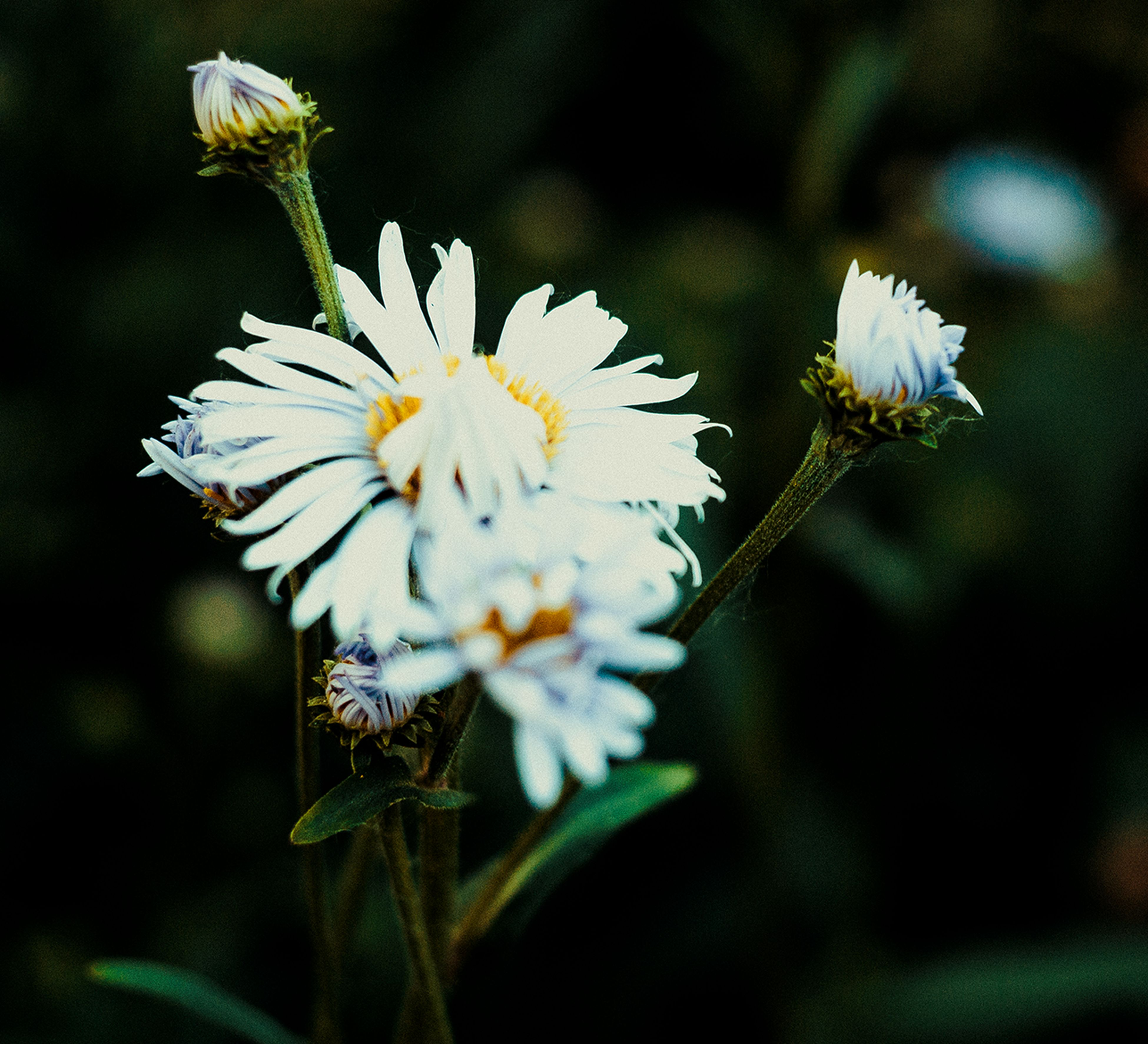 flower, freshness, white color, fragility, growth, flower head, petal, focus on foreground, beauty in nature, close-up, nature, blooming, white, plant, stem, selective focus, pollen, in bloom, blossom, outdoors
