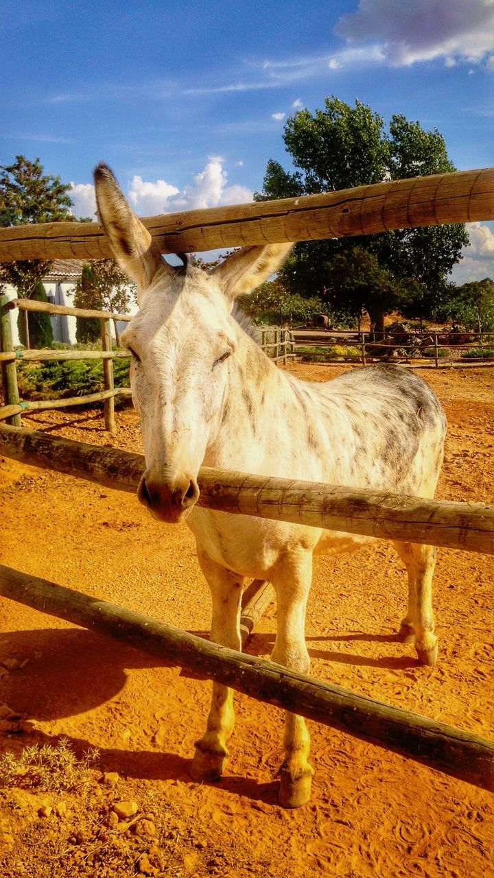 Close Up View Of Donkey Behind Fence