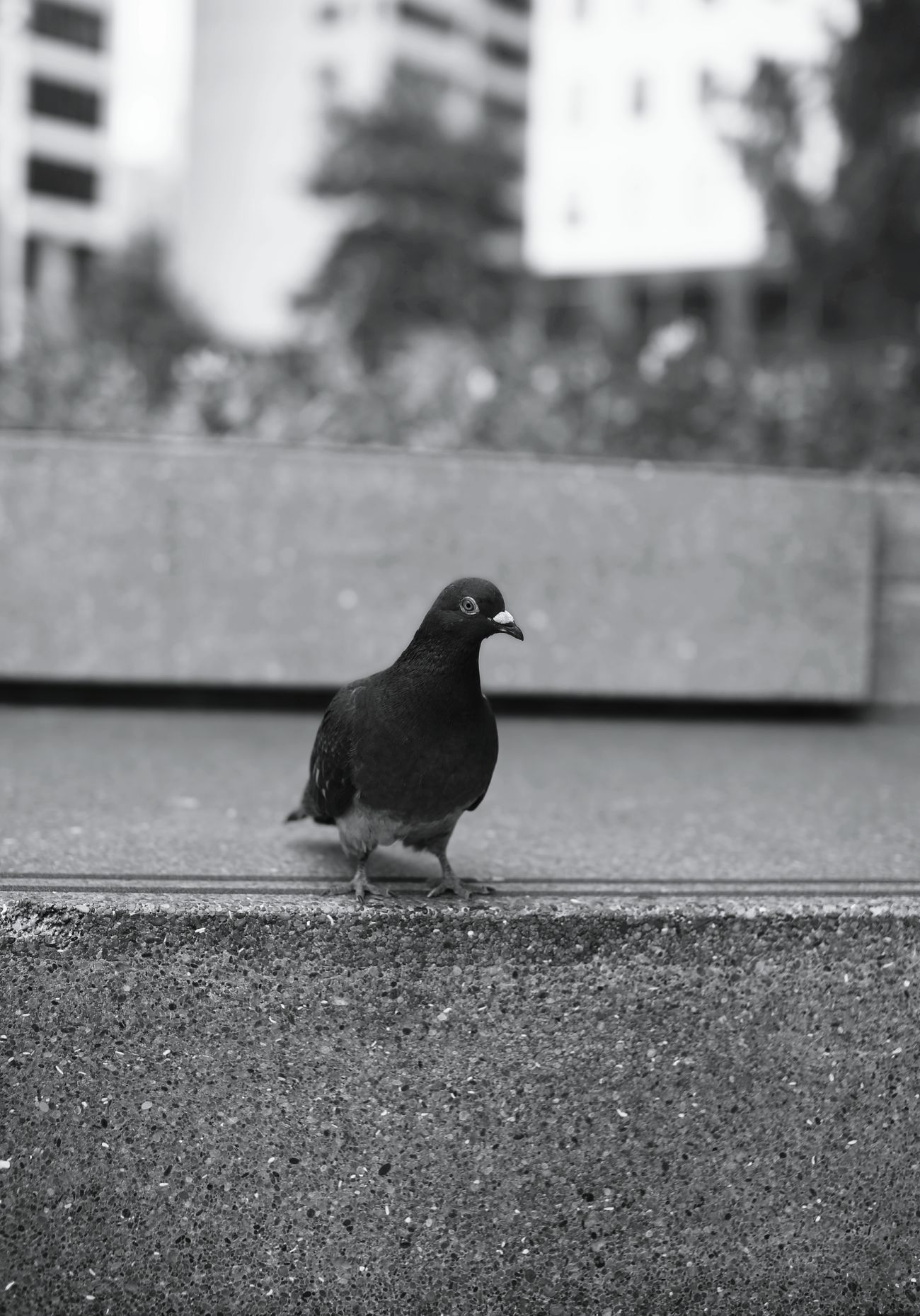 Bird One Animal Animal Themes Bird Day No People Outdoors Nature Animal Wildlife Geometric Shape Sociality Lifestyles Inside Things TakeoverContrast Focus On Shadow Check This Out Reality Mind  The Way Forward Arts Old-fashioned Playing Monochrome Photography Inspired