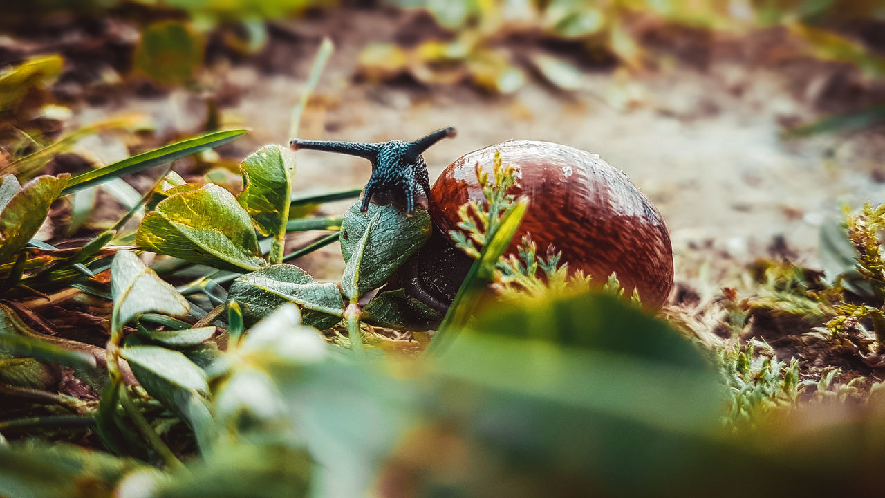 one animal, animal themes, animals in the wild, nature, insect, wildlife, selective focus, close-up, outdoors, leaf, no people, day, green color, animal wildlife, beauty in nature, fragility, slug