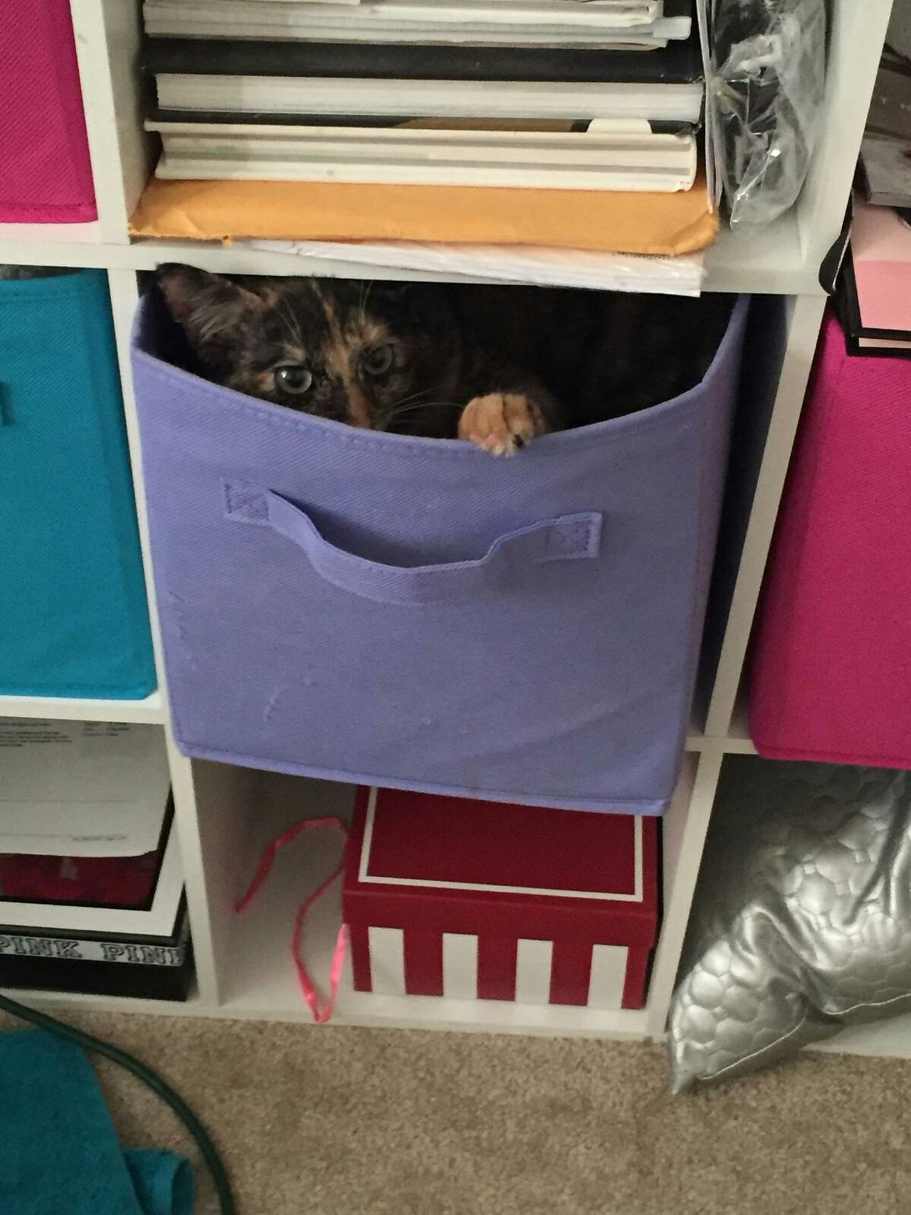 Hiding from the boy cats! I'm so sneaky! Hi! Kitten Adorable Tortoiseshelltabbycat Abbicat Abbicat Hiding Cat hiding