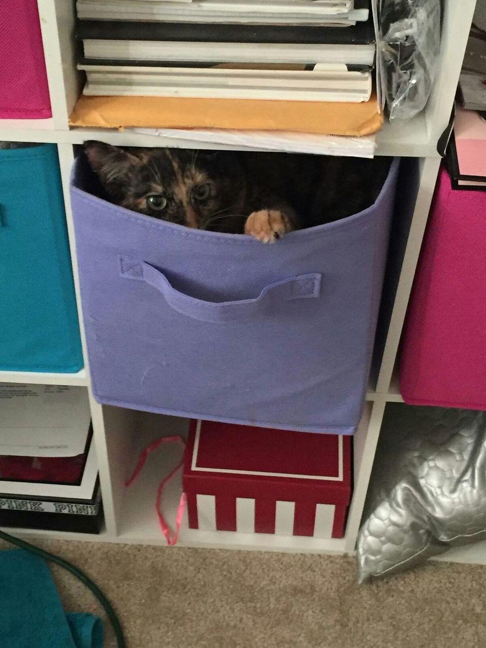 Hiding from the boy cats! I'm so sneaky! Hi! Kitten Adorable Tortoiseshelltabbycat Abbicat Abbicat Hiding Cat hiding