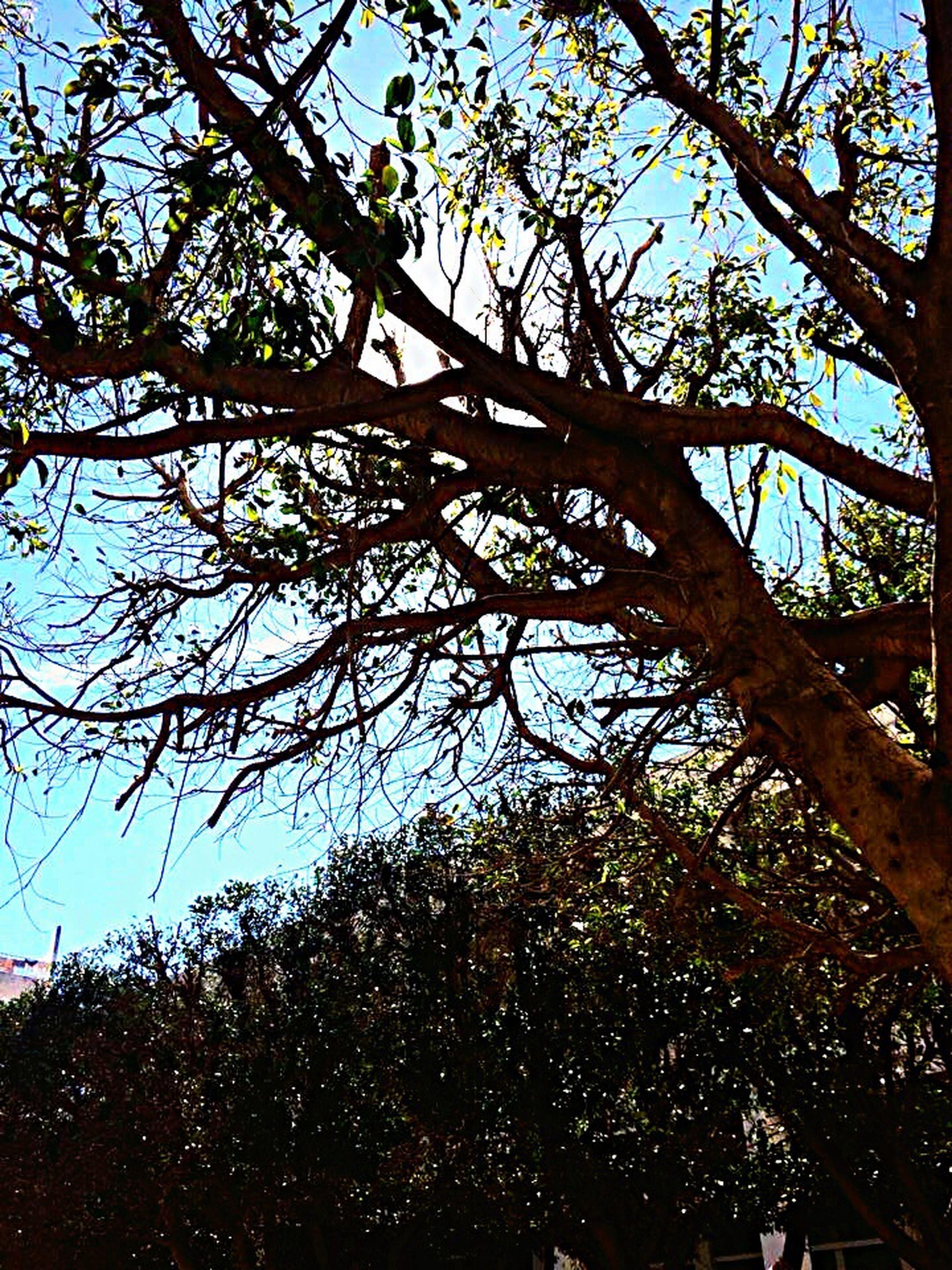 Sunnyday Tree Natural Beauty