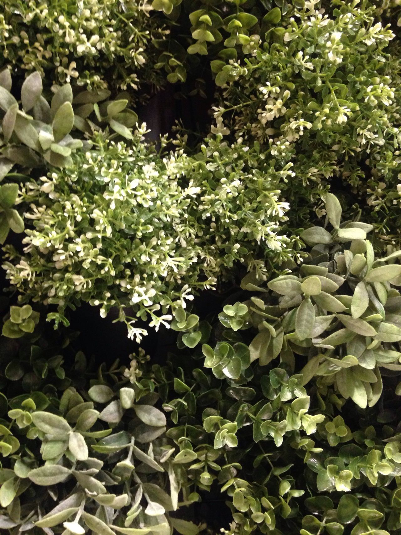 Green Growth Flower Nature Beauty In Nature Green Color Freshness Plant No People Fragility Day Blooming Outdoors Close-up Green Wall Plants 🌱 Pattern, Texture, Shape And Form Textures And Surfaces