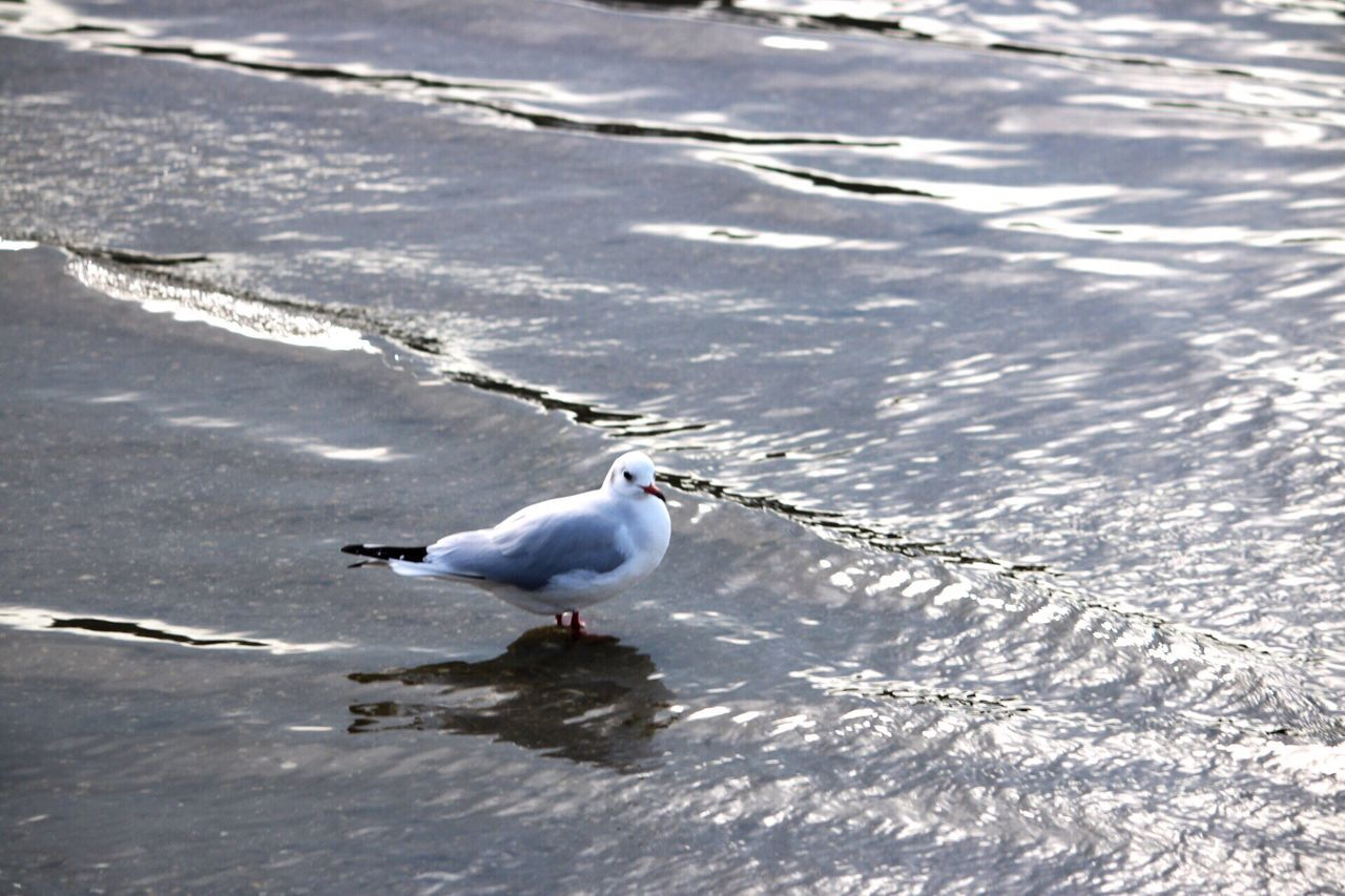 High Angle View Of Seagull Perching On Wet Shore