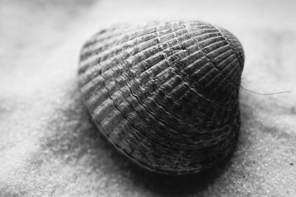 Shell Shells Hello World Beachphotography Beach Muschel Muscheln Sammeln Muschelschalen Nature Taking Photos Taking Pictures Fullframe SONY A7ii