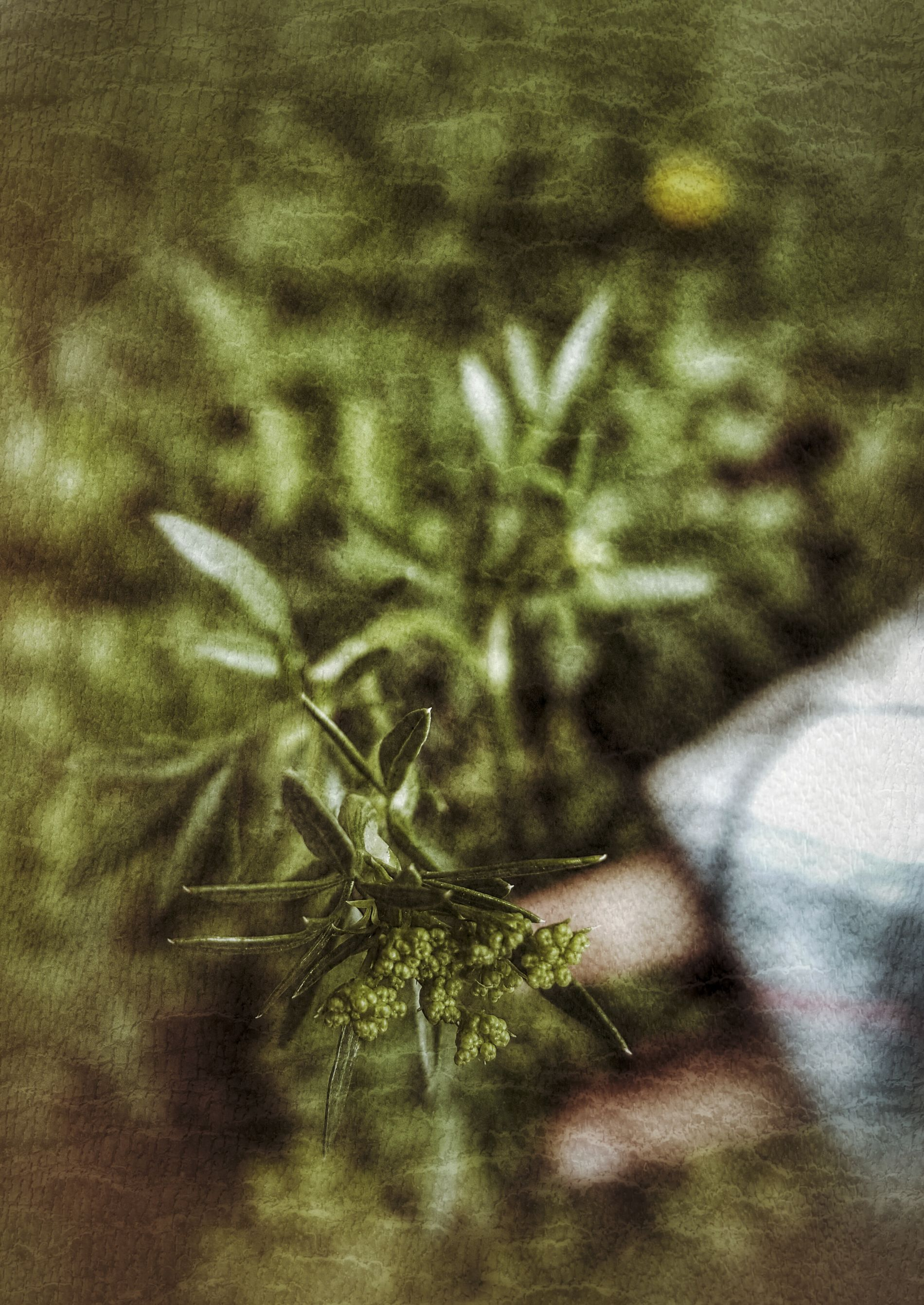 Dramatic Angles Mysterious Hand Mysterious Green Natural Selective Focus Natural Pattern Plant Single Flower Detail Nature Beauty In Nature Artistic Turkey Türkiye Turkeyphotooftheday Turkishfollowers Turk Turkish Geyve Sakarya