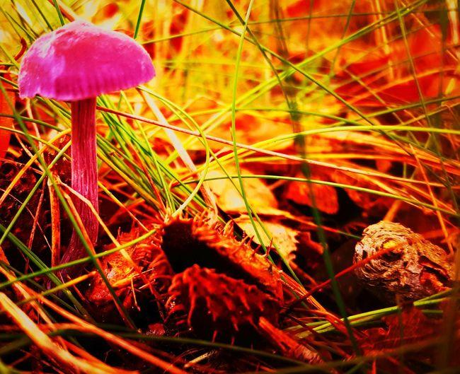 Autumn Autumn Colors Toadstool DeBilt Netherlands Samsung Galaxy S6 Enjoying Life First Eyeem Photo