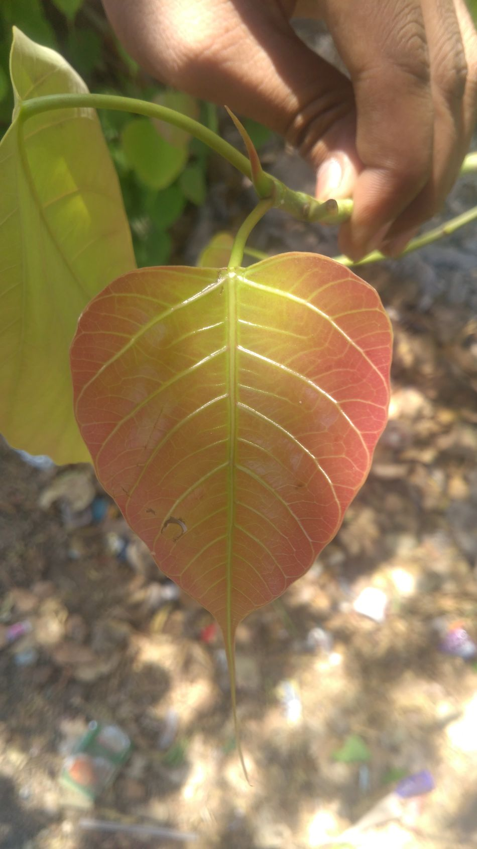 Cutness of sumner Leaf Nature Outdoors Close-up Beauty In Nature Freshness