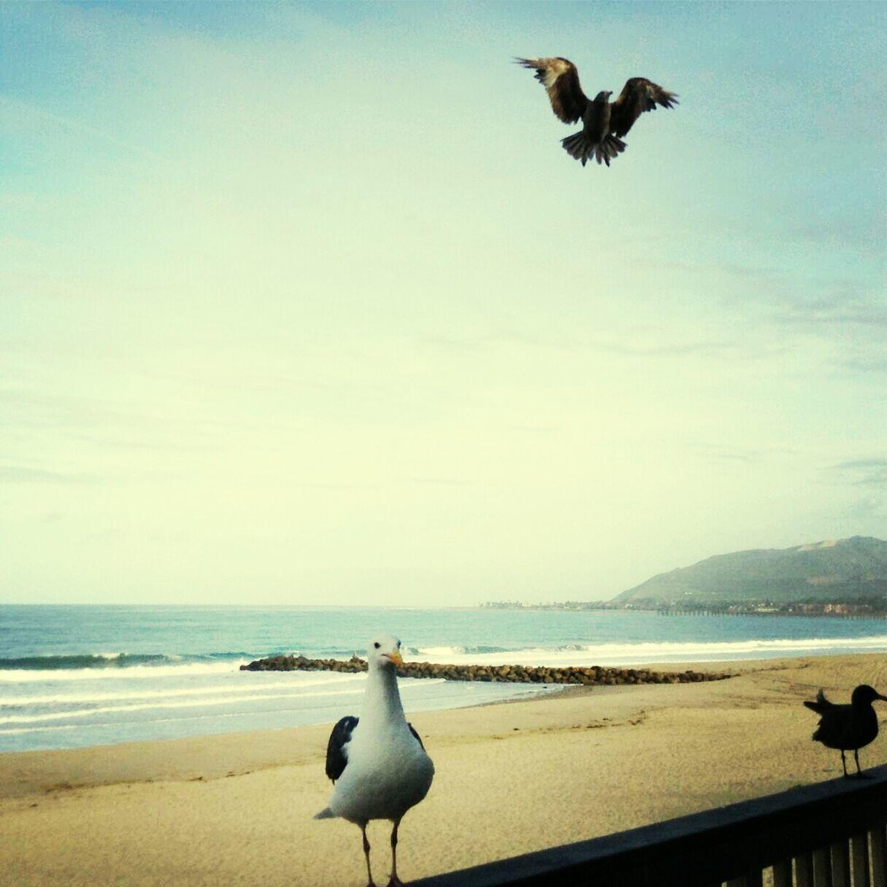 Seagulls on beach