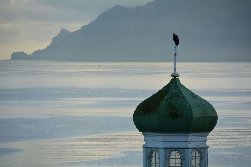 Bald Eagle Sunrise Shades Of Blue in Morning Light Morning Ritual Russian Orthodox Church Nikon The Landscapist - 2015 EyeEm Awards Getting Inspired (Had to re-upload this one!)