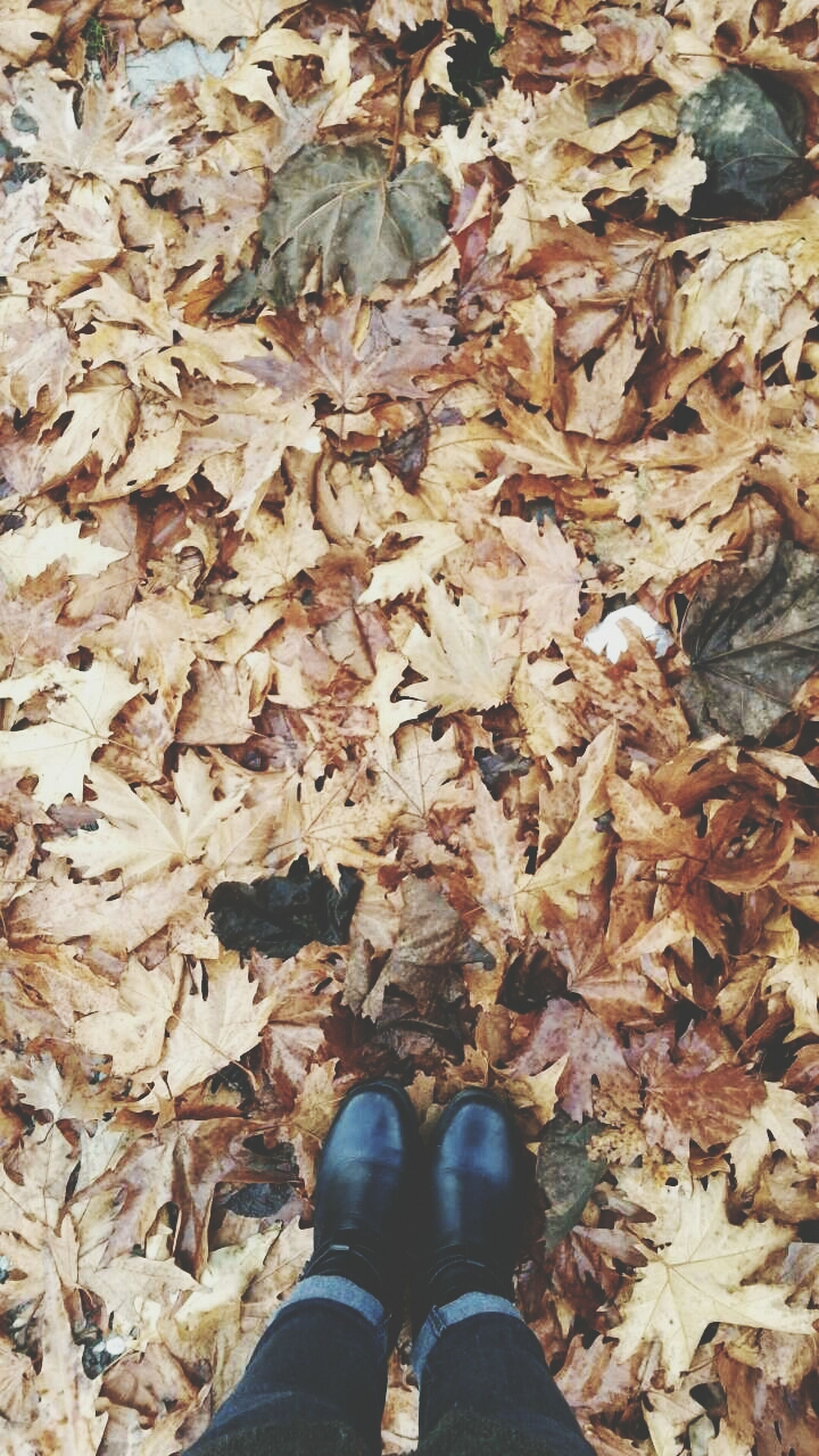 low section, person, shoe, personal perspective, leaf, autumn, standing, dry, high angle view, lifestyles, leaves, change, season, human foot, leisure activity, unrecognizable person, men