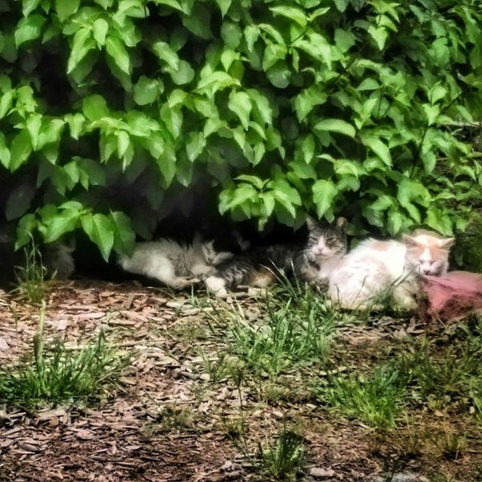 Colfaxkitties Colfaxcats Takinganap Familynaptime HDR Hdrphotography Photography Rsa_streetview Photooftheday Instagood