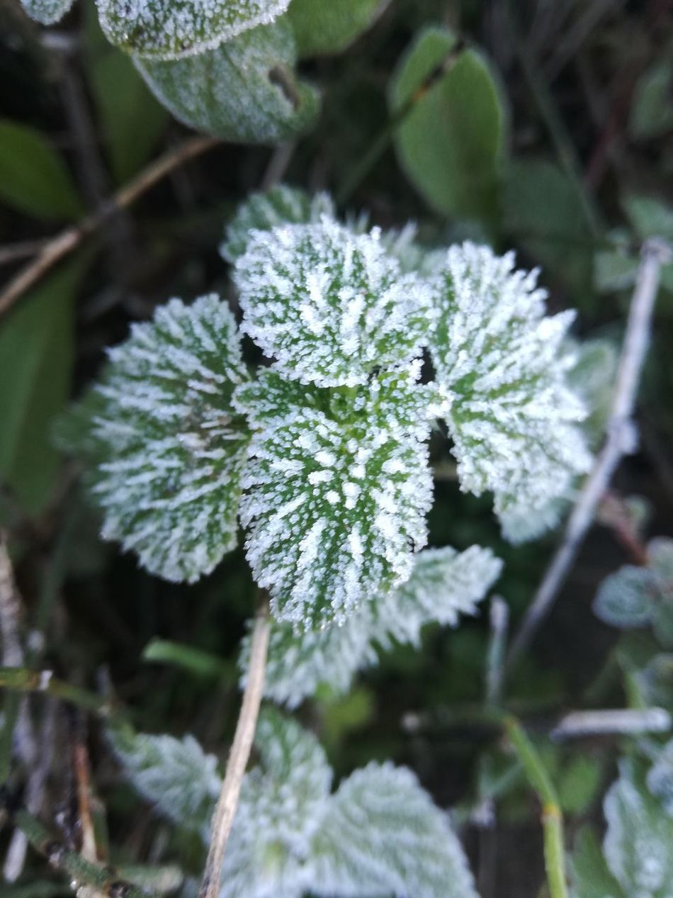 Beauty In Nature Close-up Cold Temperature Day Flower Flower Head Focus On Foreground Fragility Freshness Frozen Frozen Nature Green Color Growth Ice Iced Leaf Nature No People Outdoors Plant Snow Winter Winter Winter Wonderland Wintertime
