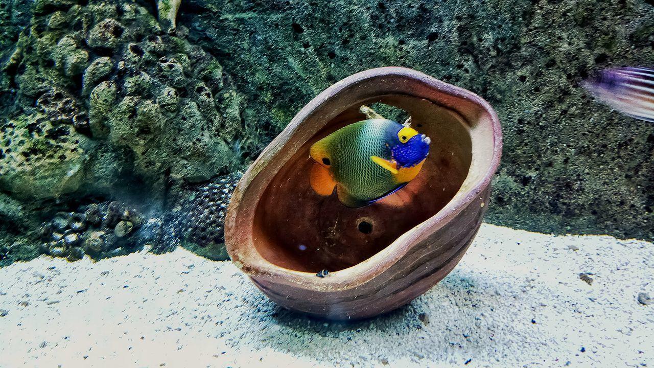 Underwater world Sea Life UnderSea Fish Multicolor Vibrabt No People Close-up Indoor Aquarium Coral Life