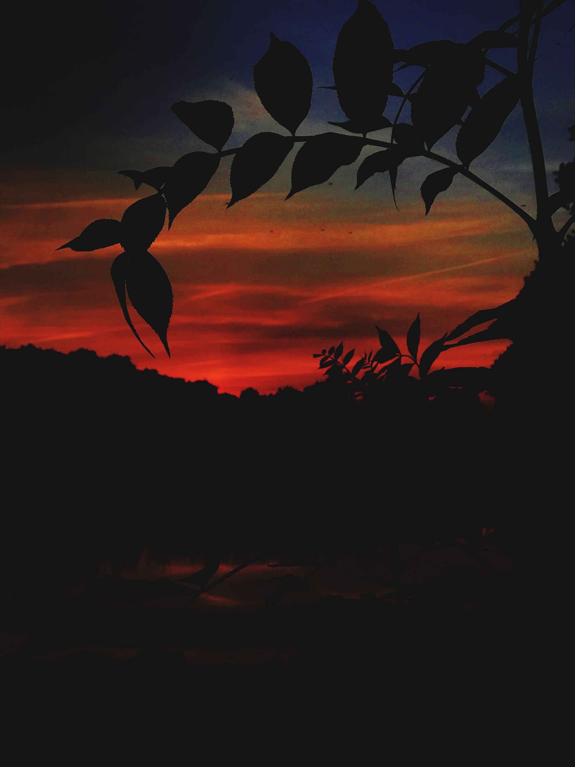 sunset, silhouette, nature, beauty in nature, no people, growth, plant, tree, tranquil scene, scenics, sky, tranquility, outdoors, close-up, day