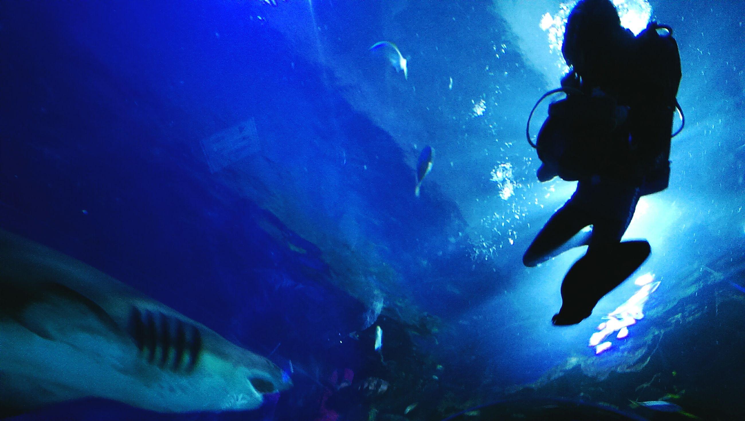lifestyles, men, leisure activity, underwater, blue, silhouette, indoors, enjoyment, water, illuminated, night, undersea, person, fun, togetherness, swimming, aquarium, unrecognizable person