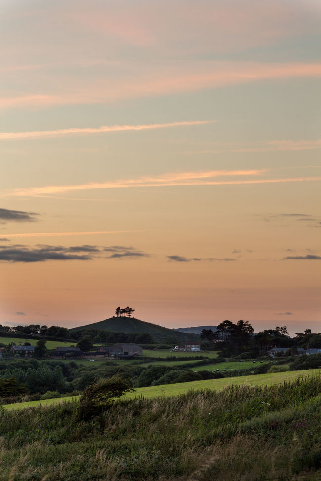 Colmers Hill- there is something mystical here. The four watchmen of Dorset, an ancient history. Hill Dorset,England Dorset TreePorn Trees Sunset_collection Landscape Landscape_Collection Fields England Canon Colour Of Life Colours Colours Of Summer Sunset Golden Hour Clouds And Sky Outdoors Colmers Hill