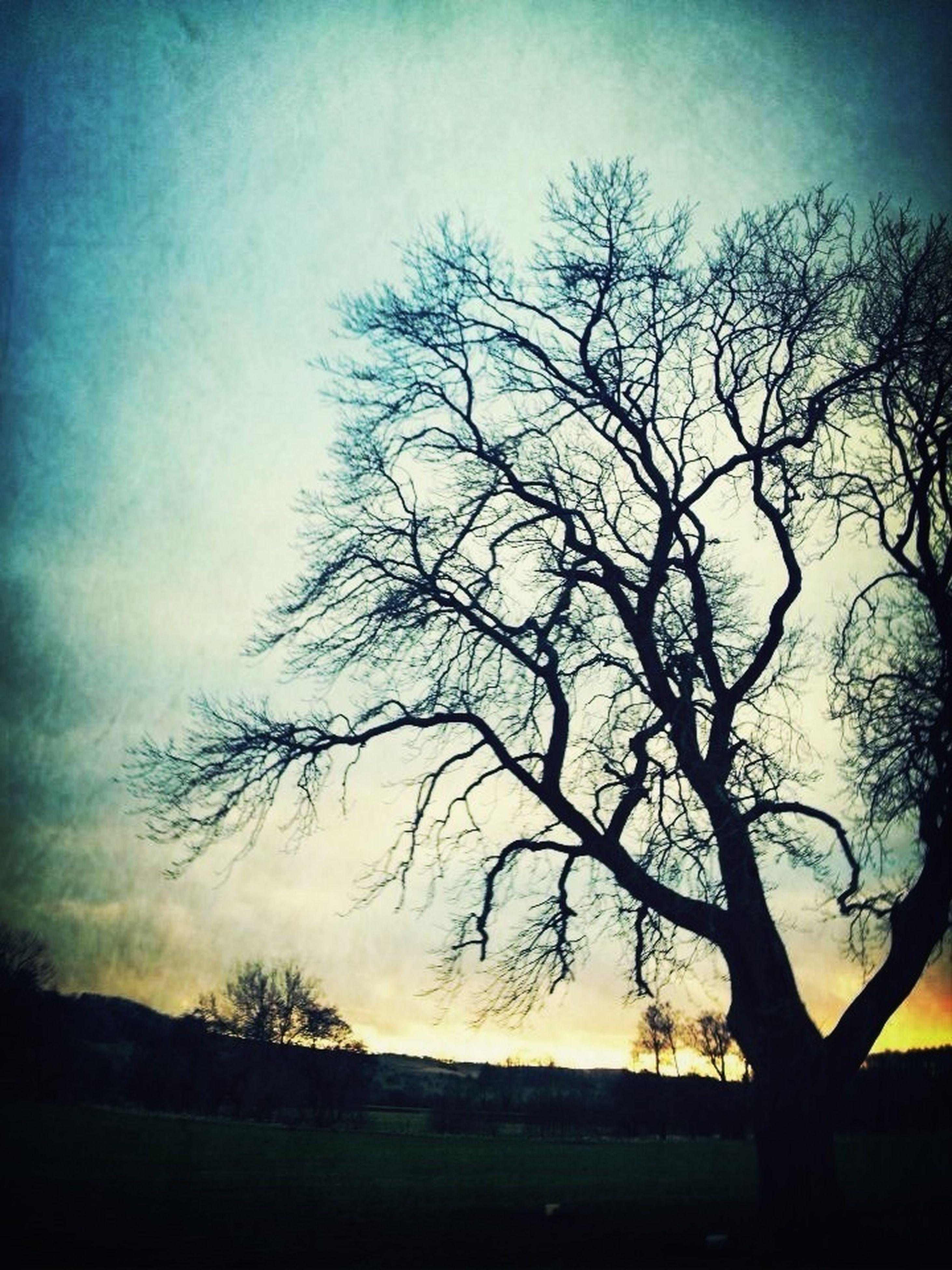 bare tree, tree, silhouette, tranquility, tranquil scene, scenics, sky, beauty in nature, branch, nature, landscape, sunset, water, non-urban scene, dusk, idyllic, field, outdoors, lake, non urban scene