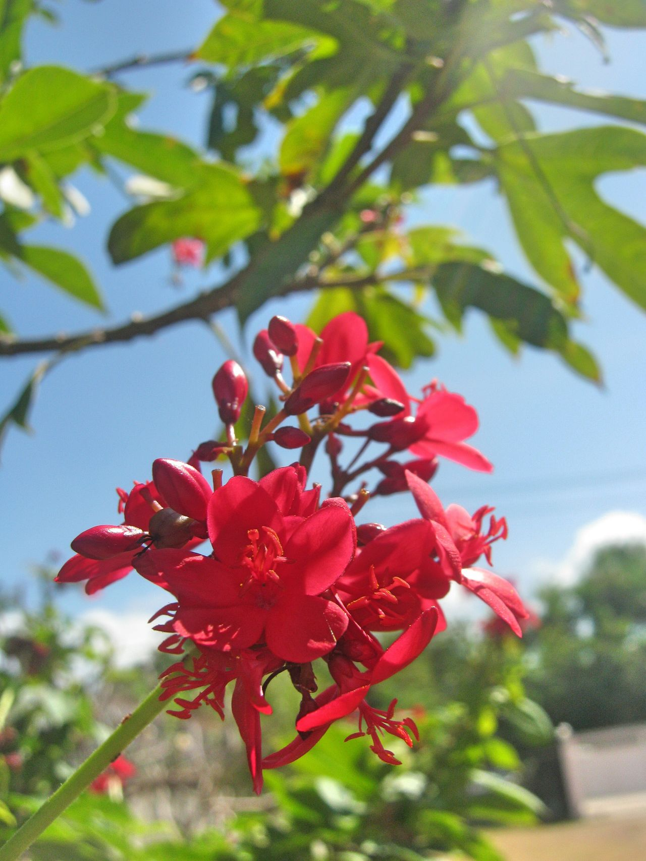 Red Nature Growth Flower Beauty In Nature Close-up Focus On Foreground Freshness Day Outdoors Fragility Green Color No People Flower Head Sky
