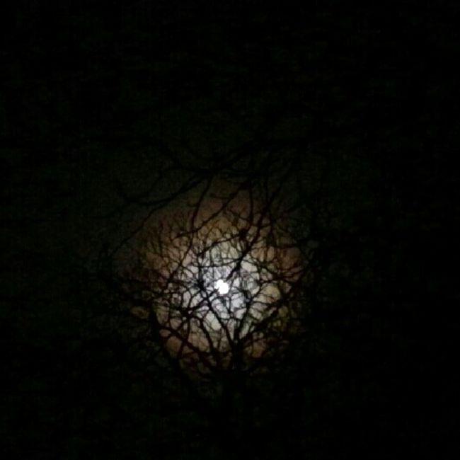 Night Full Moon