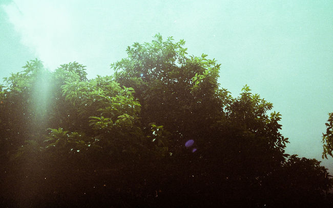 Mood 35mm 35mm Film Amateurphotography Analog Analog Camera Analogue Photography Beauty In Nature Buyfilmnotmegapixels Dailyphoto EyeEm EyeEm Best Shots Faded Film Film Photography Filmshooters First Eyeem Photo Majestic Mood New Talents No People Photo Photooftheday Picoftheday Tree Treetop