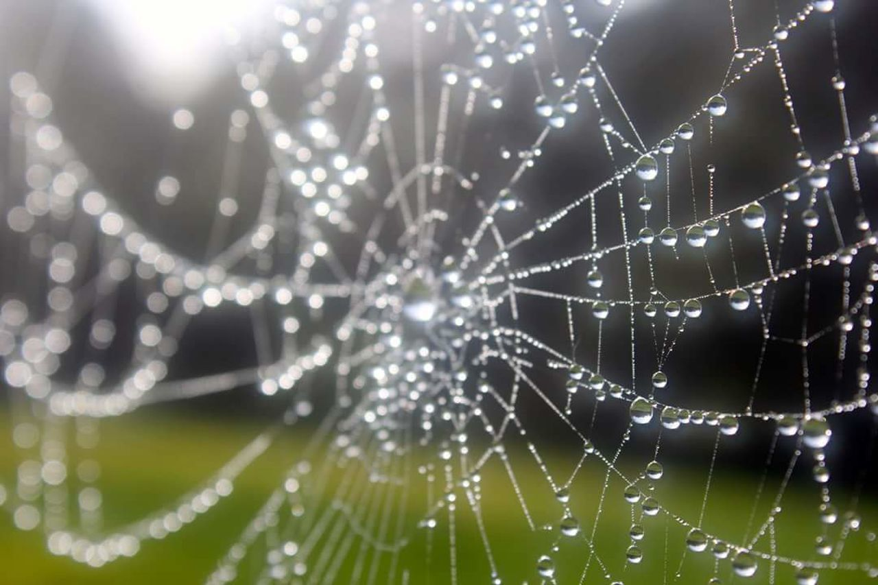dew #morning #drops plant nature Dew Drops On Spider Web