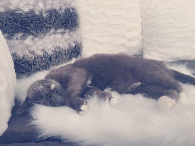 Cozy Kitten Rainy Days Relaxing Enjoying Life