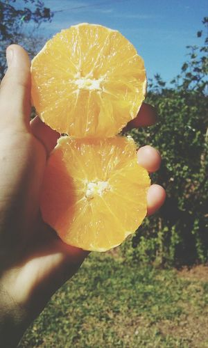 Fruit Citrus Fruit Healthy Lifestyle Orange Color Healthy Eating Nature Human Hand