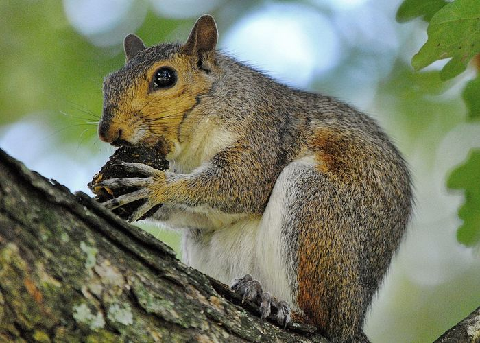 Alertness Animal Themes Animals In The Wild Branch Close-up Focus On Foreground Gray Nature No People One Animal Side View Squirrel Squirrel Tree Trunk Whisker Wildlife Zoology