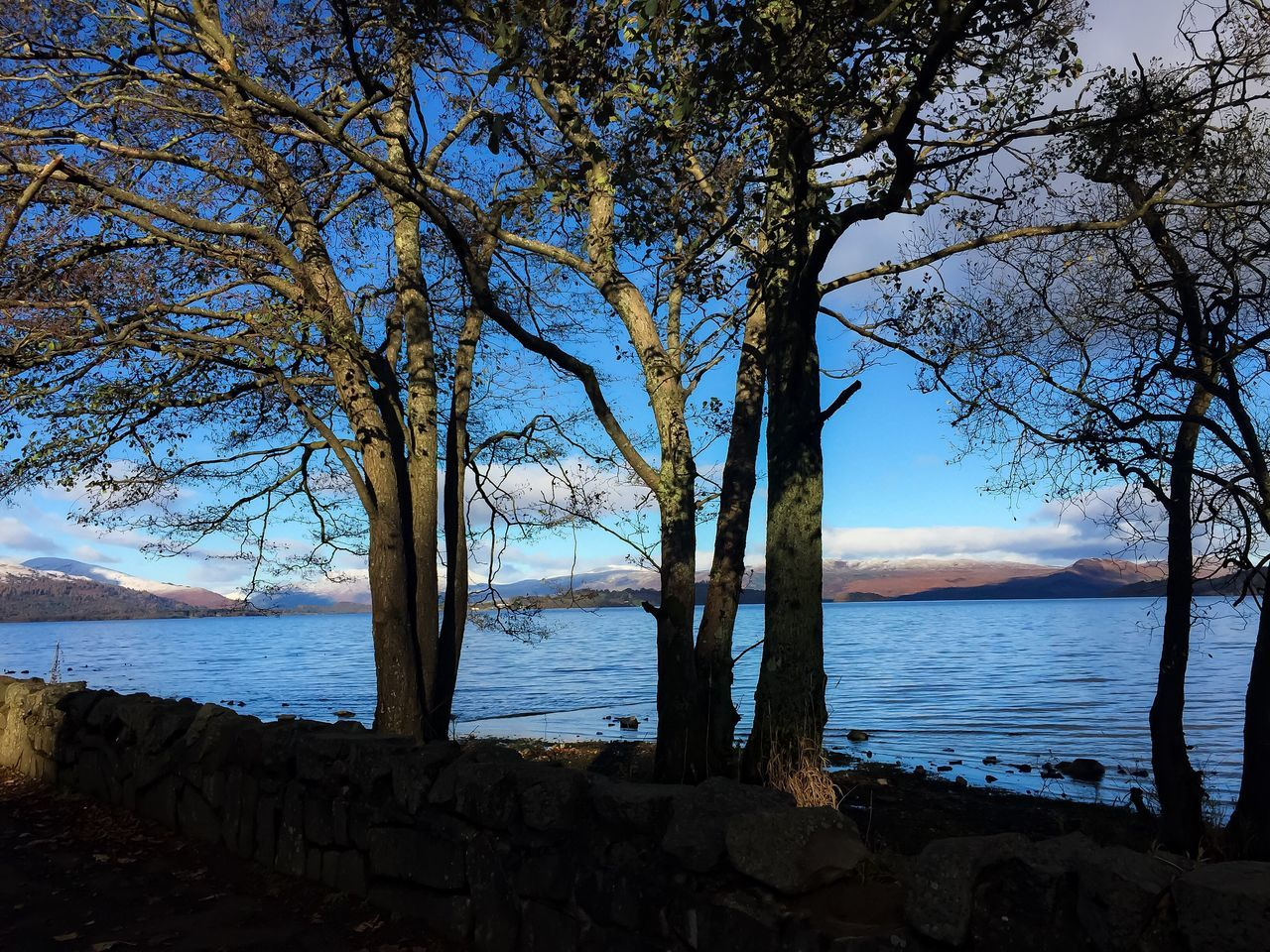 Water Outdoors Tree Tree Trunk Bare Tree Growth Landscape Tranquil Scene Non-urban Scene Scenics No People Day Focus On Foreground Rural Scene LochLomond Beautiful Day
