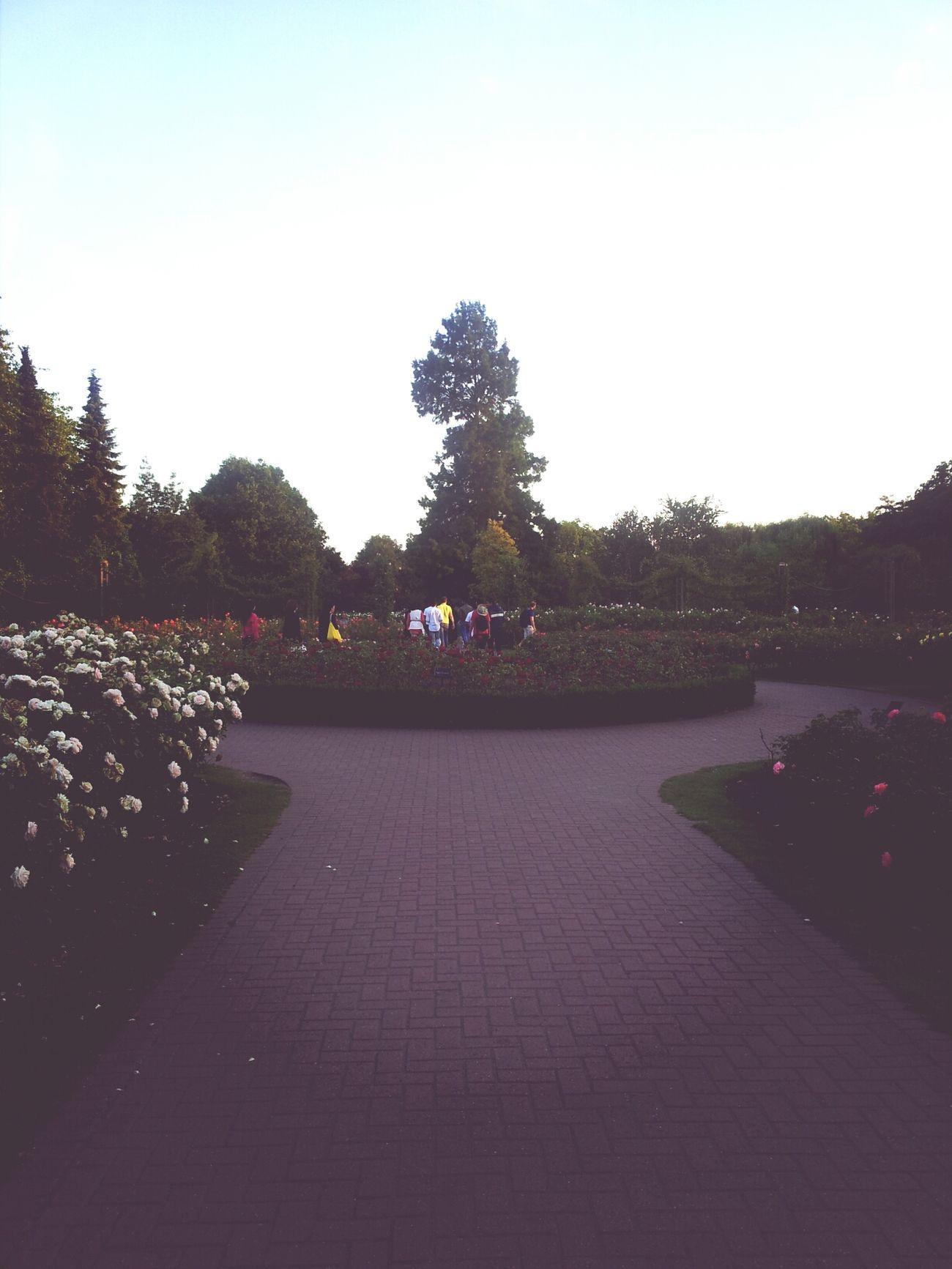 Regents park. LONDON❤ Park Nature