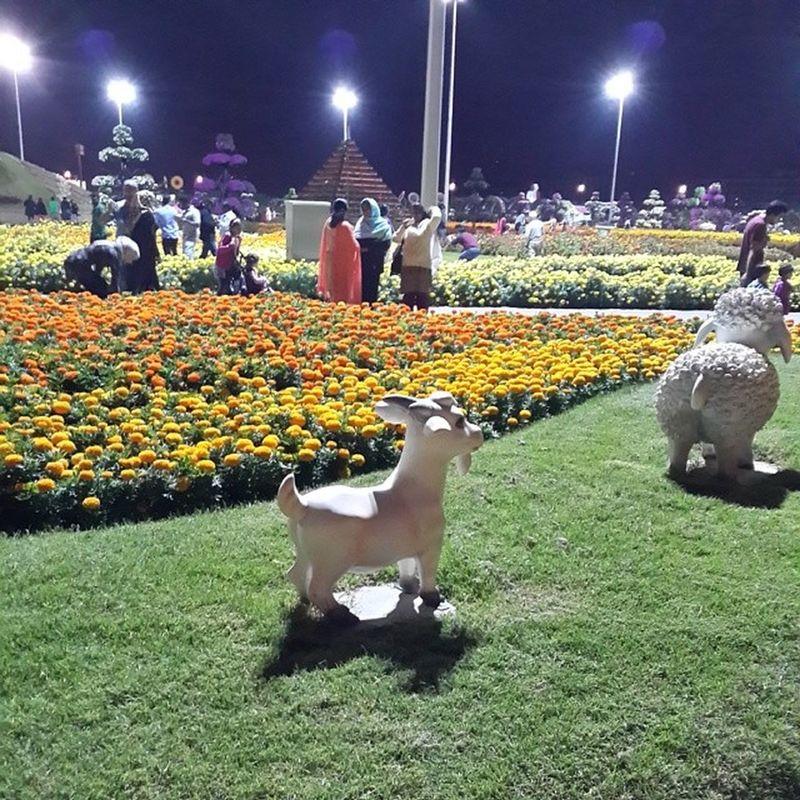 MiracleGarden Dubai UAE Flowers Garden Animals Goat