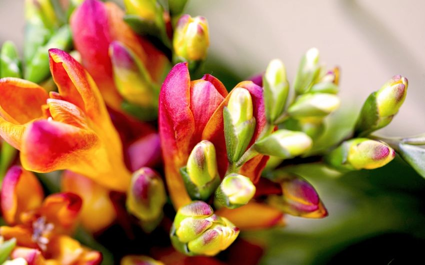 Beauty In Nature Close-up Day Flower Flower Head Fragility Freshness Growth Nature No People Outdoors Petal Plant