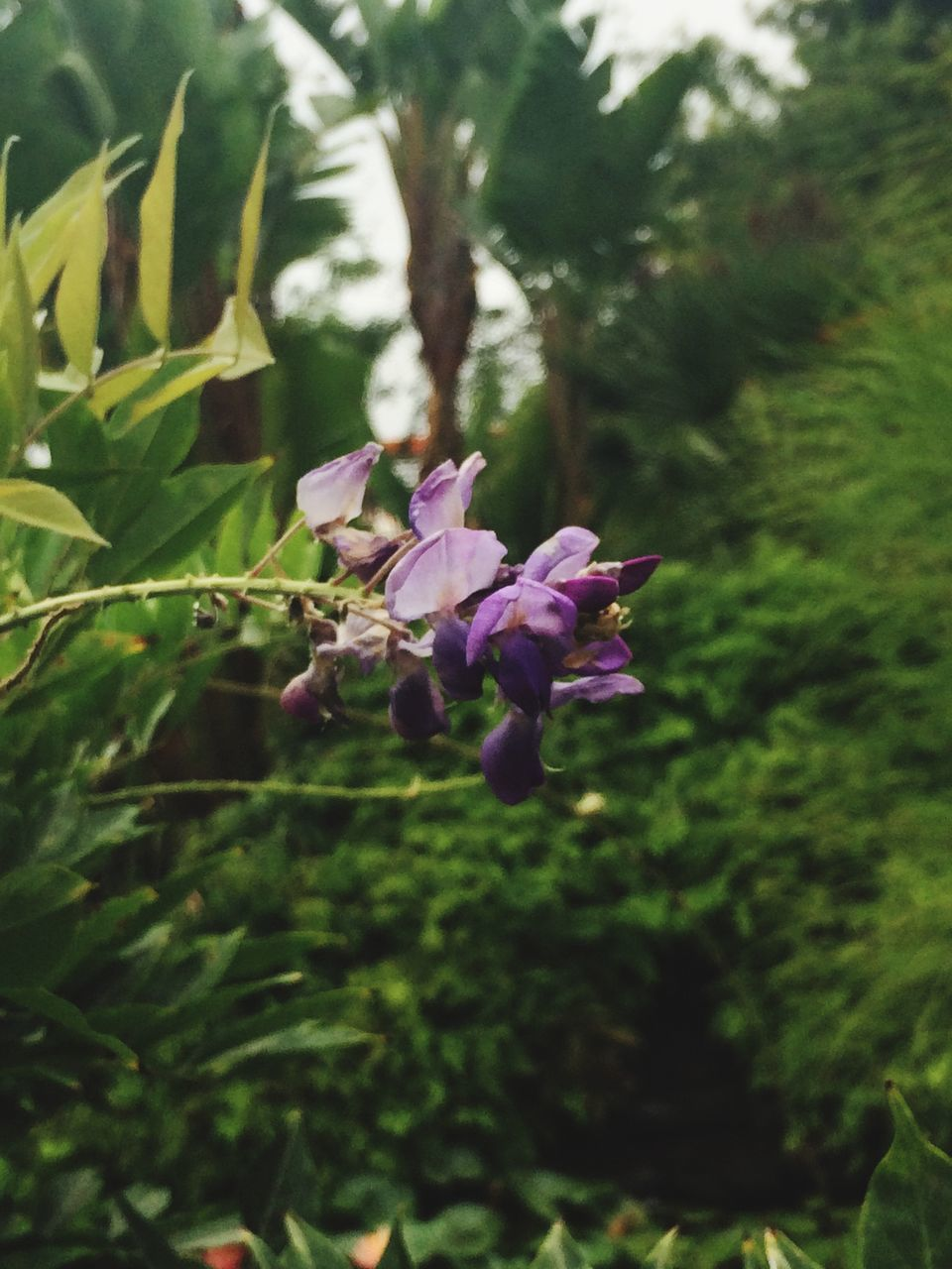 flower, growth, nature, fragility, plant, petal, beauty in nature, no people, day, freshness, outdoors, blooming, close-up, flower head