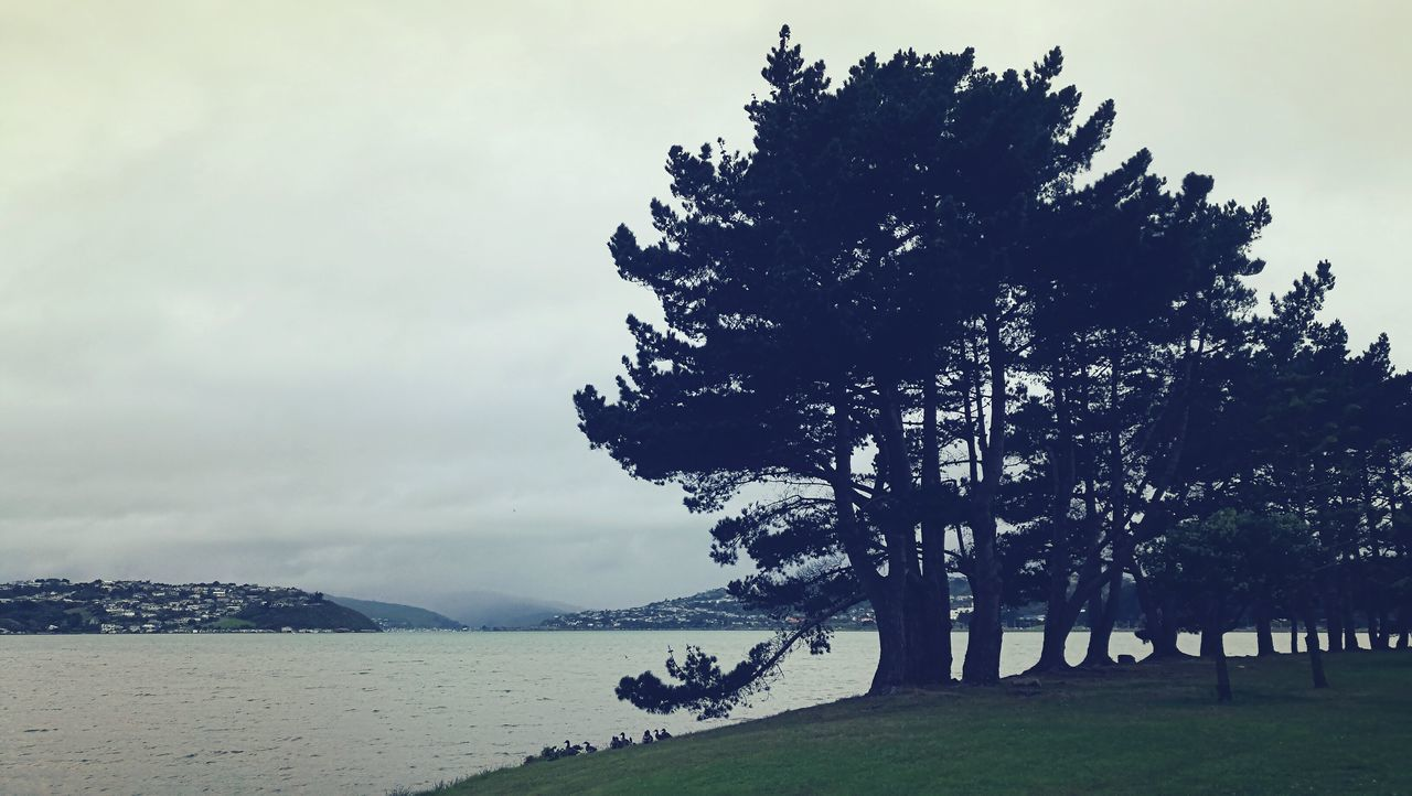 New Zealand Porirua Harbor Waterfront Trees And Water Dullweather Ngati Toa Nature Silhouette Beauty In Nature Mountain Sea Beach Outdoors Sky Scenics Day People Tree Grass