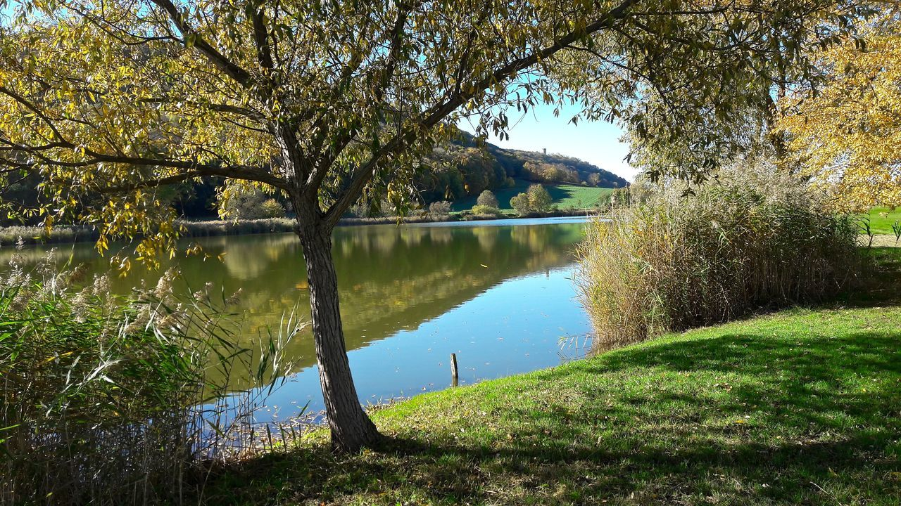 Autumn Autumn Collection Autumn Colors Deutschland Drei Gleichen Herbst Thuringia Beauty In Nature Green Color Growth Lake Nature No People Outdoors Reflection Sonne Thüringenentdecken Tranquil Scene Tranquility Tree Water