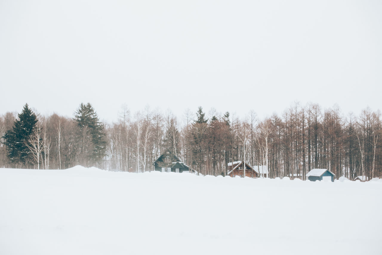 Beauty In Nature Christmas Christmas Tree Cold Temperature Day Daylight Frozen Nature Hokkaido Japan Nature No People Outdoor Outdoors Snow Tourism Tranquility Travel Destinations Tree Winter