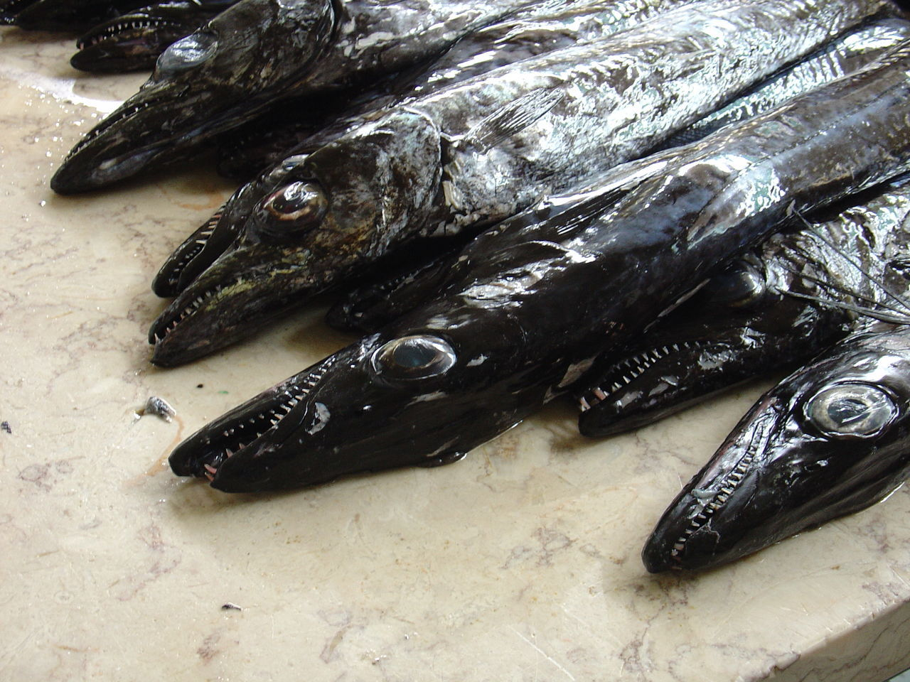 Animal Themes Aphanopus Carbo Close-up Espada Preta Fish Food Food And Drink Madeira Madeira Islands, Portugal Madeira, Portugal No People Schwarzer Degenfisch Seafood
