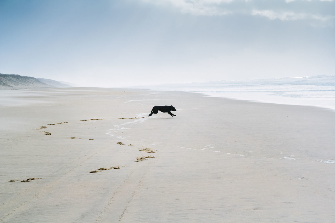 Beautiful stock photos of jagd, nature, animal themes, one animal, no people