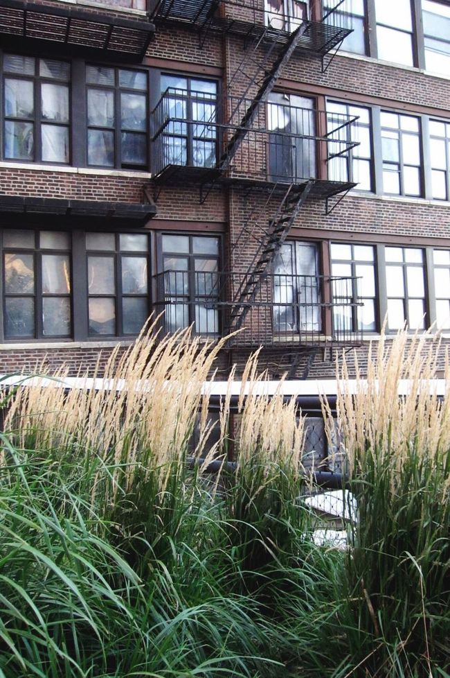 Built Structure Architecture Building Exterior Window Grass Building Growth City Plant Damaged In Front Of Day Outdoors NYC Battle Of The Cities NYC Photography NYC Highline Chelsea Chelsea Market