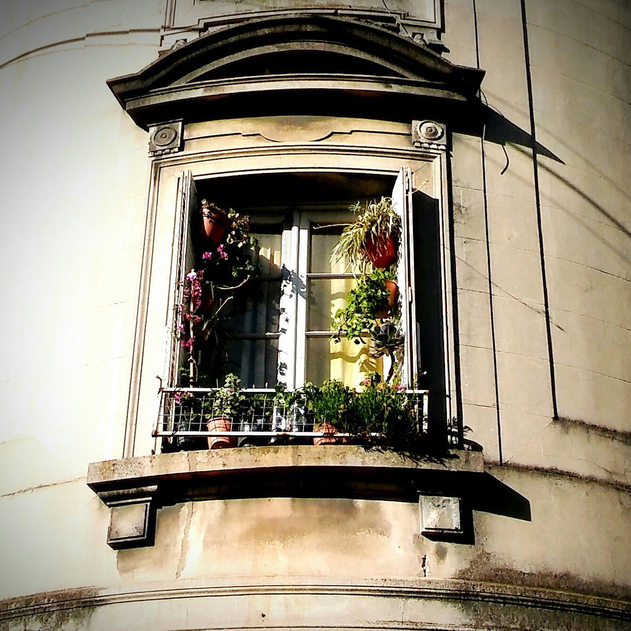 architecture, built structure, building exterior, window, day, low angle view, no people, plant, outdoors, growth, flower, nature, window box, close-up