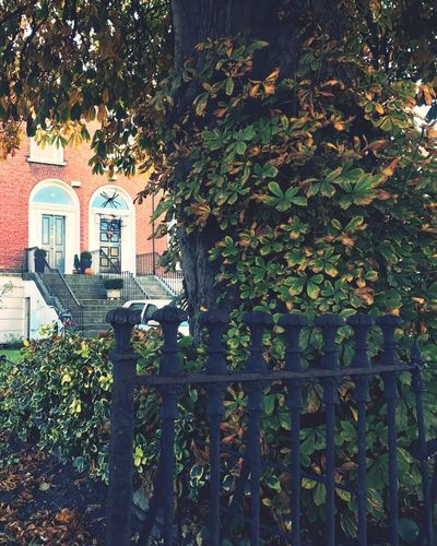 Finally fall. Growth Architecture Leaf Building Exterior Plant Built Structure Tree No People Ivy Day Outdoors Nature Creeper Plant Fencepost Halloween Decorations Halloween EyeEm Door Decorations Garden Photography Fall Colors Autumn🍁🍁🍁 Perspective Photography Front Or Back Yard Home Sweet Home Irelandinspires Dublin
