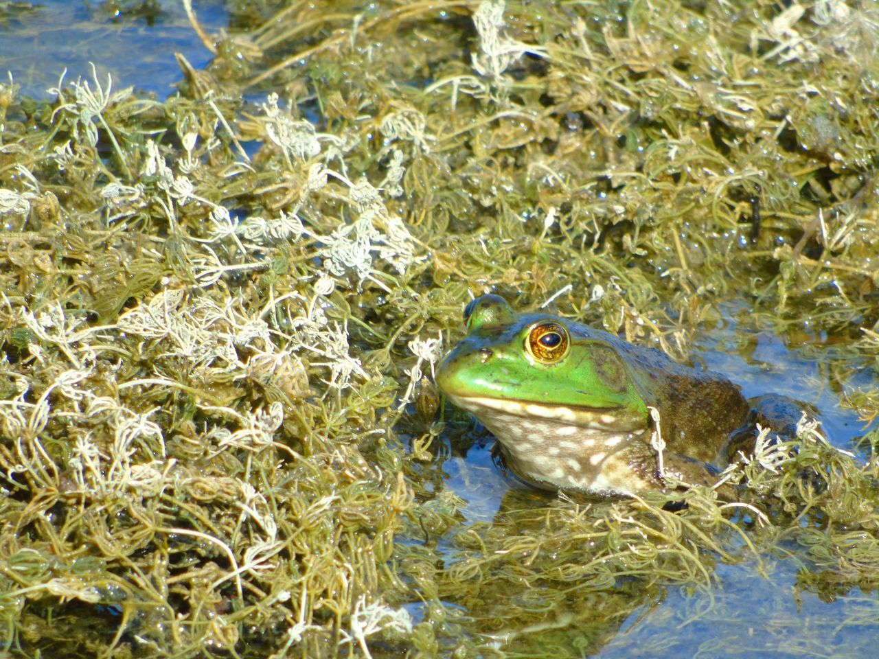 Beautiful stock photos of frog, Day, Frog, Hiding, Horizontal
