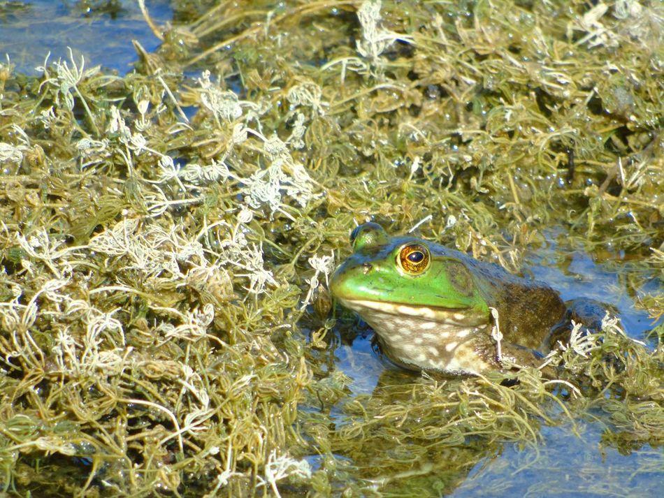Beautiful stock photos of frog, Day, Frog, Hiding, Horizontal