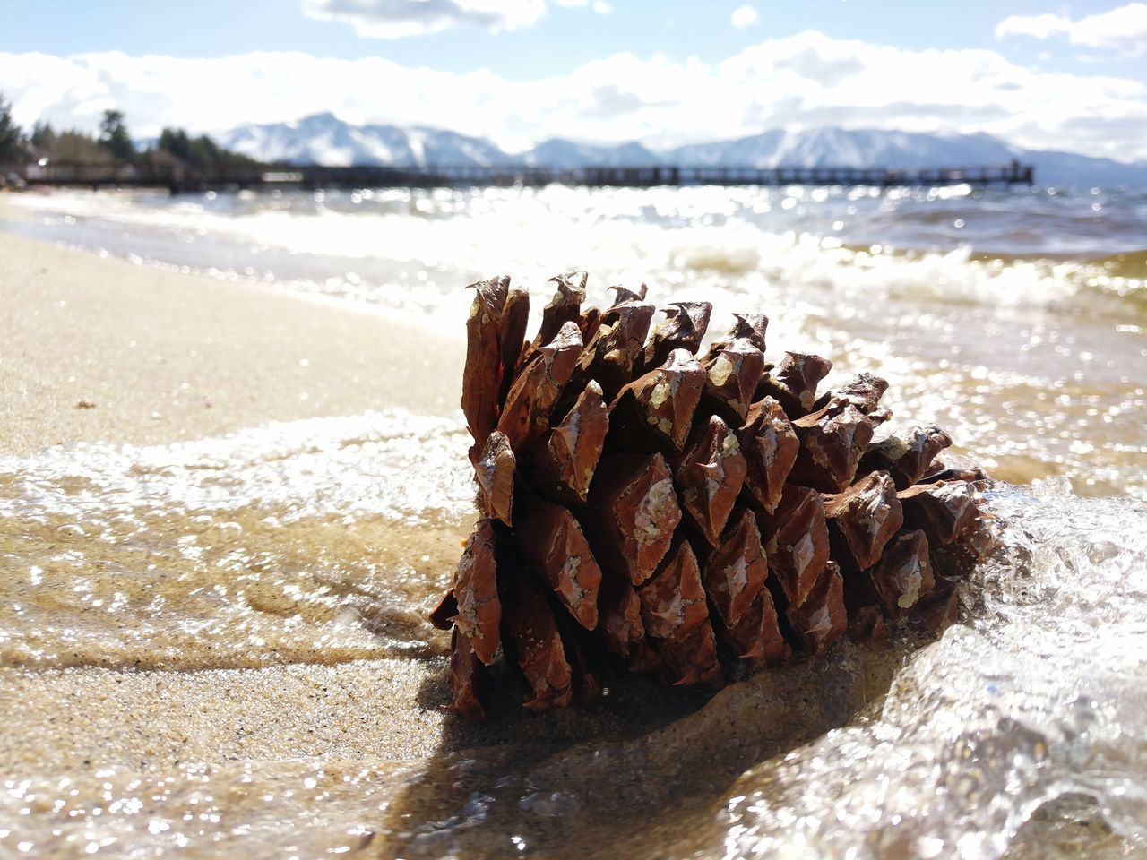 Tranquillity Sierra Nevada Mountains Water Close-up Pine Cone Waves Macro Nature Wave Sunlight Beach Nature Outdoors Beauty In Nature Sky Day Summer Mountains And Beach Lake Alpine Lake Alpine Beach California